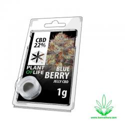Jelly Blueberry 22% CBD 1g