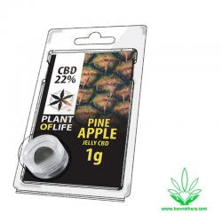 Jelly Pine Apple 22% CBD 1g